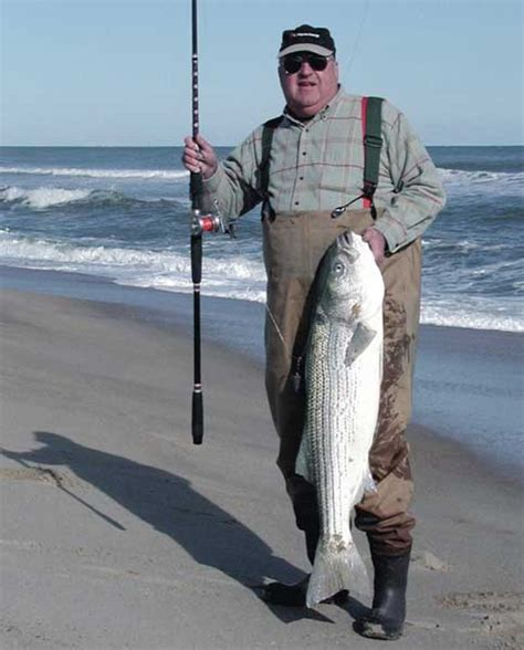 north carolina stripper fishing jpg 483x600